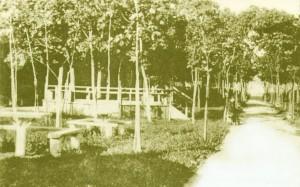 detlib_sosnovskiy-garden